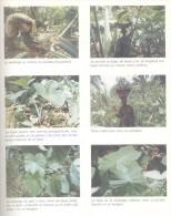EL BOSQUE DE GUINEA ECUATORIAL - MARIA DOLORES MORENO MEDINA - CENTRO CULTURAL HISPANO-GUINEANO EDICIONES AÑO 1990 213 P - Ontwikkeling