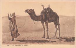 Carte Postale Ancienne - Pays Du Maghreb - La Prière Au Désert - Otros