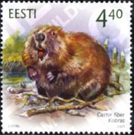Ref. 165335 * MNH * - ESTONIA. 2005. FAUNA . FAUNA - Estland