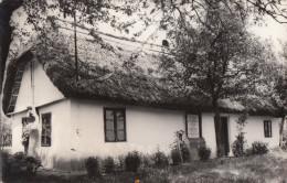 Satu Mare, Cauas, Casa Memoriala Ady Endre Memorial House 52 - Rumania