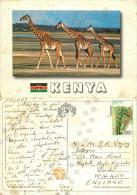 Giraffes, Kenya Postcard Posted 1990s Nice Stamp - Kenya