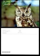 7888-animaux-3158     Chouette - Oiseaux