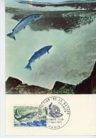 Saumon-Protection De La Nature-France -carte Maximum - Fishes