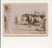 VILLENEUVE SUR LOT 47 -   Environs - Scène De Battages -  Photo  Contrecollée Sur Carton Fort - Photos