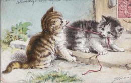 Belle CPA CHATS Illustrés  Les CHATONS S´ Amusent  Qui Va Gagner à Tirer ?  1904 - Katten