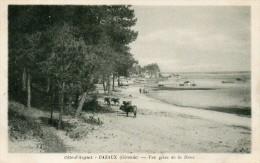 CPA  -  CAZAUX  (33)  Vue Prise De La Dune   ( Vaches) - France