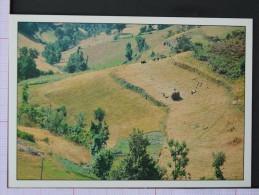 AGRICULTURA DE SUCALCOS - LEIRATOS - CABECEIRAS DE BASTO - 2 Scans (Nº06116) - Braga