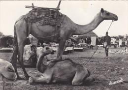 AFRIQUE Occidentale Française,colonie,SENEGAL,HAUTE VOLTA,BURKINA FASO,chameau,chamelle Et Son Petit,village,rare - Burkina Faso
