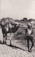AFRIQUE,Sénégal,africain, Chameau,désert,transport  D´arachides,métier,outil à La Main,rare - Sénégal