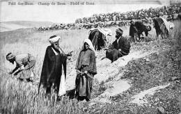 ¤¤  -  PALESTINE   -  Feld Des Boas  -  Champ De Booz  -  Field Of Boaz  -  ¤¤ - Palestine