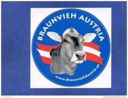 Autocollant - Autriche - Braunvieh Austria - Vache - élevage - Agriculture Publicité - Sticker - Stickers