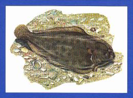 LINGUADO - SOLEA LASCARIS (RISSO) - Pesci E Crostacei