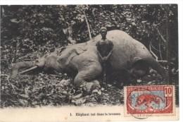 Elèphant Tuè Dans La Brousse - Altri
