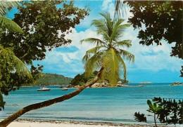 LES SEYCHELLES         PRASLIN - Seychelles