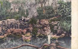 1900 CIRCA GIBRALTAR THE ALAMEDA GARDENS - Gibraltar