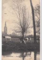 BR40053 Quievrain Paysage Cow  Belgium  Front/back Image - Quiévrain