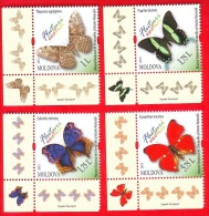 Moldova, 4 V., Exotic Butterflies, 2013 - Moldavie