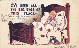Bed Bugs , PU-1906 - Insetti