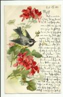 C. Klein * Catharina Klein * Meissner & Buch * Serie 1047 * Unsere Gartenfreunde * 1901 * Kohlmeise - Klein, Catharina