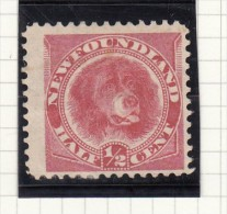 Newfoundland Dog - 1880 - Newfoundland