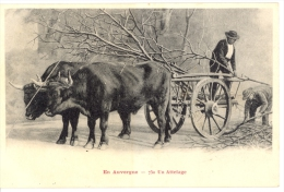 En Auvergne - Un Attelage - Auvergne