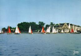 Les Regates Au Port - Loctudy
