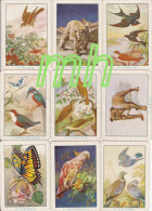 TAROT, DIVINATOIRE  ,VOYANCE, CARTOMANCIE , JEU DE 40 CARTES  ANCIENNES 9 CmX 6,5   BON ETAT - Tarot