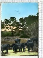 L451 -    ELEPHANTS  -    Timbrée  Du GABON - Elefanten
