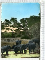 L451 -    ELEPHANTS  -    Timbrée  Du GABON - Elefantes