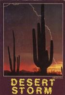 Saguaro Cactus Arizona Desert Storm Tempe Arizona - Tempe