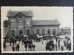 Torhout Station Voor Den Oorlog Van 1914-18 (paarden, Chevaux) - Torhout