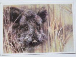Verrat Boar Wildschwein / Russian Postcard - Animales