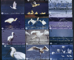 Complete Set Of 12 Taiwan Early Bus Ticket Cards Black-faced Spoonbill Bird (A0048-0059) - Tickets - Vouchers