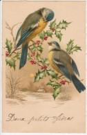 Carte Voeux - Illustration Oiseaux, Houx - New Year