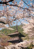 Kiyomizu Temple, Kyoto, Japan Postcard Used Posted To UK 2000s Stamp #1 - Kyoto