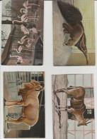 Animaux :  Lot De  Cartes - Tierwelt & Fauna
