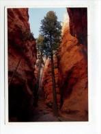 GF298 - BRYCE CANYON NATIONAL PARK - Bryce Canyon