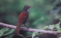 Taiwan Telephone IC Card IC03C012 Bird Nature - Taiwan (Formosa)