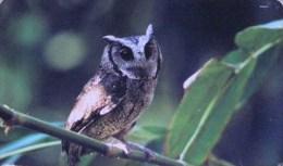 Taiwan Telephone IC Card IC06C011 Bird Nature Owl - Taiwan (Formosa)