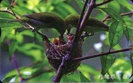 Taiwan Telephone IC Card IC09C013 Bird Nature - Taiwan (Formosa)