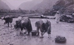 Taiwan Telephone IC Card IC04C029 Farm Farmer Grain - Taiwan (Formosa)