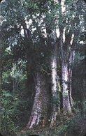 Taiwan Telephone IC Card IC03C020 Sacred Tree Forest Scenery - Taiwan (Formosa)