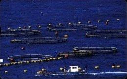Taiwan Telephone IC Card IC07C033 Oceanic Aqua-culture Fish Scenery - Taiwan (Formosa)