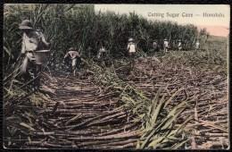 RECOLTE DE CANE DE SUCRE - SUGAR CANE CUTTING - SUIKERRIET - HONOLULU 1913 - Landbouwers