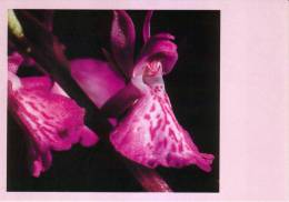 44 NANTES Fleur Orchidée CPM L'Orchis Des Marais - Flores, Plantas & Arboles