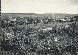 Chanly S /Lesse - Panorama … De La Commune - 1959 - Wellin