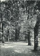 Gerpinnes- Collège Saint Augustin - Un Coin Du Parc - Gerpinnes