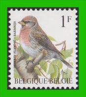 BUZIN - 2457** Sizerin Flammé / Barmsijs - FLUO Gomme Blanche Sous UV !!! - 1985-.. Birds (Buzin)