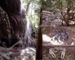 Australia Christmas Island - The Dales And Hugh's Waterfall, Robber Crab And Blue Crab - Christmas Island