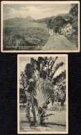 2 X Nice Old Card St- KITTS - MOUNT MISERY (animated) And Travelers Palm - Saint-Christophe-et-Niévès